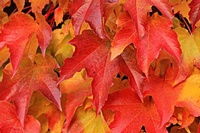 autumn autumn colours autumn leaves background